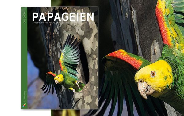 Papageien 09/2020