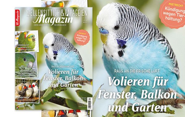WP Magazin 04-2020 Juli/ August