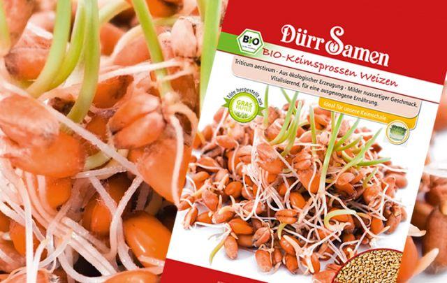 Dürr Bio Keimsprossen Weizen 75g