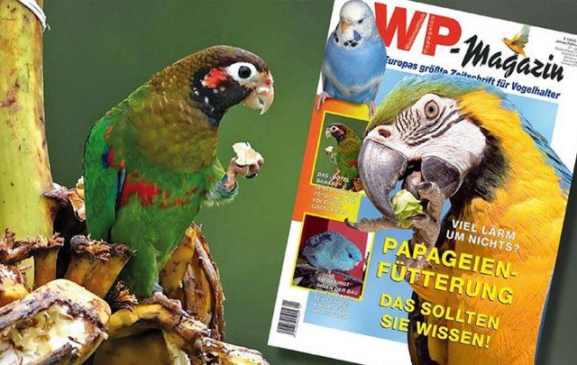 WP Magazin Januar/ Februar 2015