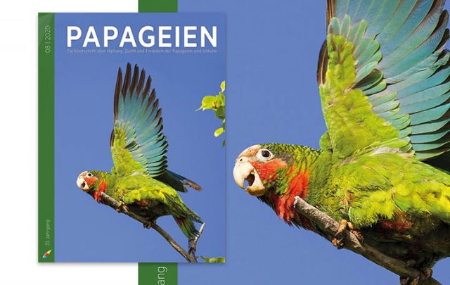 Papageien 08/2020