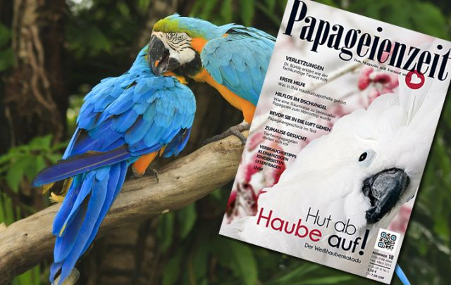 Papageienzeit Februar/ März 2015