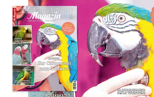 WP Magazin 1/2021
