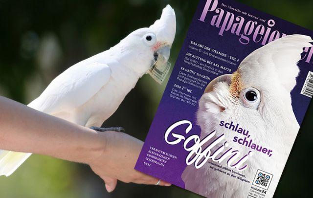 Papageienzeit Nr. 24 Februar/ März 2016