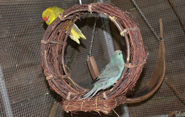 Circle Hanger 34cm