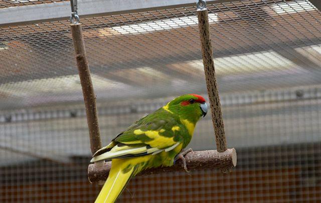 Vogelschaukel 15x15cm