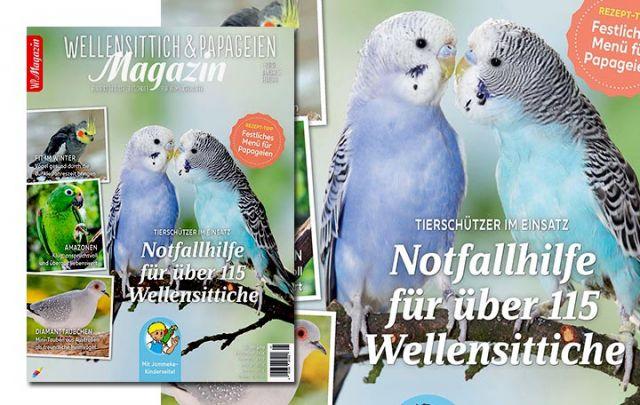 WP Magazin 1-2020