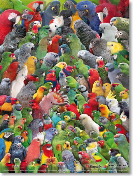 Poster Papageien der Welt