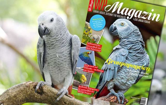 WP Magazin 1-2016